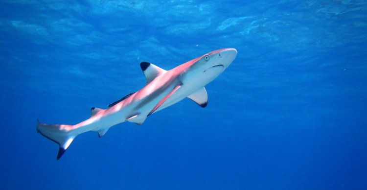 The place to acquire Diminutive one Shark as it bounces 128% from Monday low