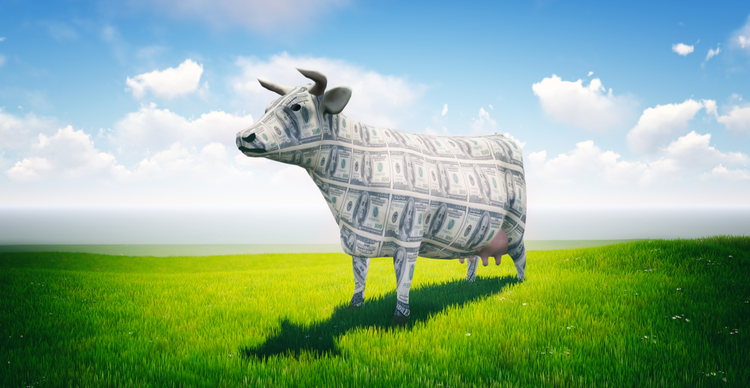 Where to prefer CashCow Finance: CCF clocks 150% every day positive aspects