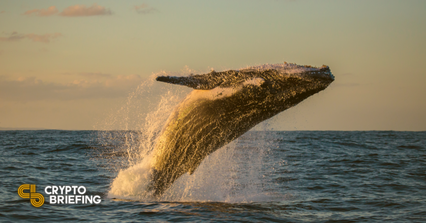Polygon Rallies as Whales Mosey Into Hunting for Spree